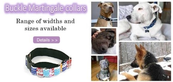 martingale buckle collars
